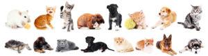 """Goed nieuws voor dierenliefhebbers: """"Wie woning of flat huurt, mag voortaan huisdier houden"""""""